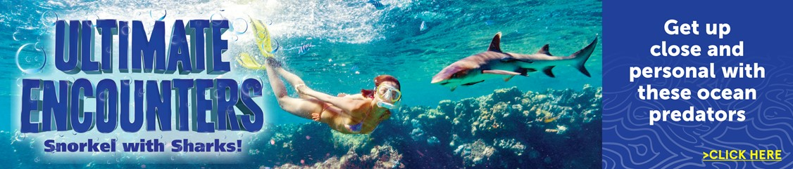 Ultimate Encounters: Snorkel with sharks