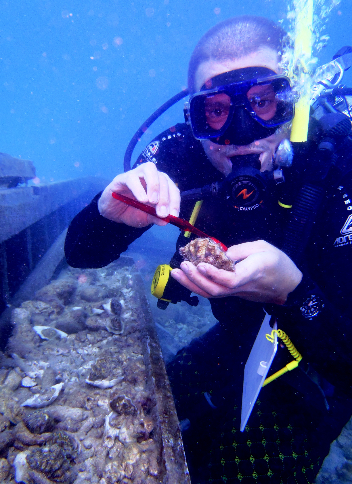 Marine Conservation Volunteering in Fiji