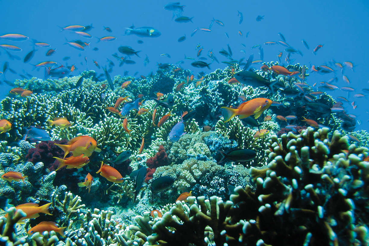 The fragile reef system in Fiji